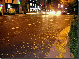 落ち葉がカサカサ風に吹かれて,道に舞うの図 photo by OptioS