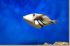 National Aquarium in Baltimore12 photo by *istD