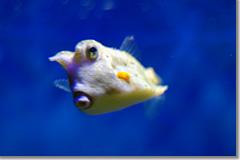 National Aquarium in Baltimore14 photo by *istD