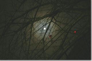 おぼろ月夜にはまだ早い(暈がかぶってるだけか) photo by *istD 焦点距離45mm F値F/4 露出時間1.5秒