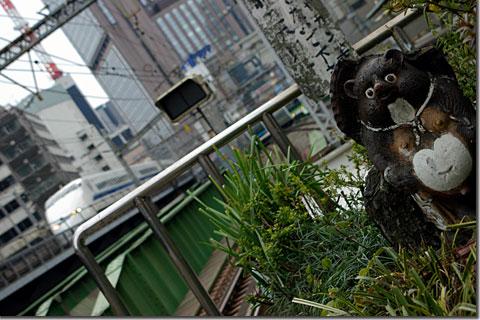 有楽町の狸 photo by *istD