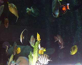 オーシャナリウムの壁は水槽。魚たちに観られながら夕食