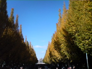 本日の神宮外苑いちょう並木 photo by W32S